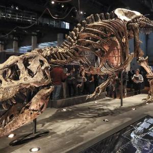 Dinosaurios Museo Interactivo La patagonia era un gran bosque con altas temperaturas, y eso te permite. dinosaurios museo interactivo